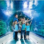 Conoce el Sea Life London Aquarium