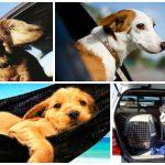 Consejos para viajar con perro que no puedes perderte